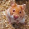 Grundsätze für einen sicheren Hamsterauslauf - letzter Beitrag von Kiwi
