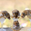 5 Hamster - Tierheim - last post by Sakura